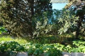 Zeleň v okolí