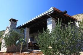 Mladé olivovníky kolem domu