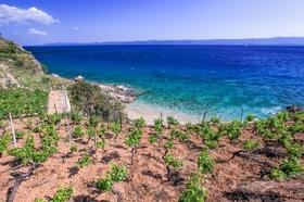 Cestu na pláž lemují vinice