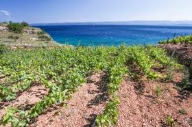 Výhled na moře z vinice