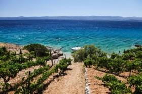 Cesta vinohradem k pláži