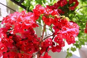 Květiny v zahradě