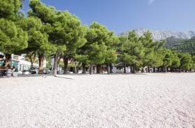 Borovice podél pláže