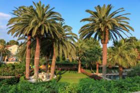 Palmy v okolí
