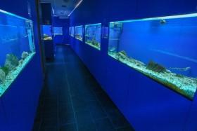 Aquarium v letovisku