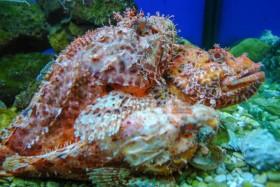 Příklad živočichů k vidění v aquariu