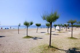 Okolí pláže se stromky