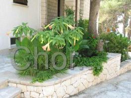 Květinová výzdoba u domu