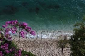 Bugenvilie u pláže