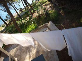 Prádelní šňůry mezi borovicemi