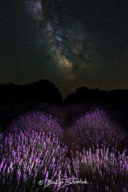 Galaxie nad levandulemi