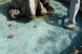 Rybičky v jezírku