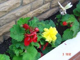 Květiny kolem domu