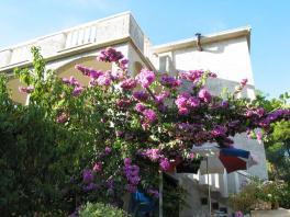 Pohled na rozkvetlou bugenvilii a terasy apartmánů