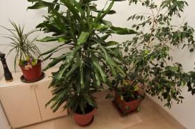 Zeleň v apartmánu