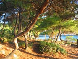 Ráno v lesíku pod Albertinou