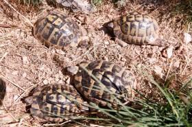 Majitel chová želvy
