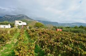 Dům je nad vinohradem