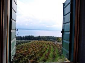 Výhled na vinohrad