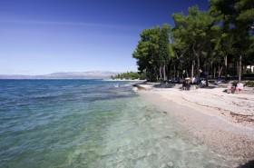 Borovicový háj za pláží
