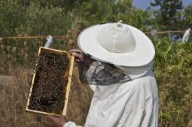 Tradice včelařství