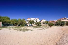 Borovice v okolí pláže