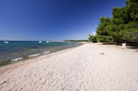 Zadní část pláže s borovicemi